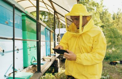 Smart Technology Could Save Dwindling Bee Populations