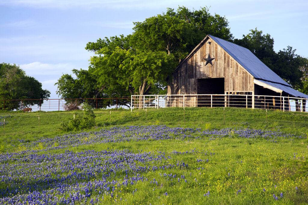Buying a farm in Texas.