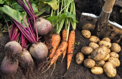 5 Needed Crops For Your Self-Sufficient Garden
