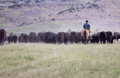 Historic Climbing Arrow Ranch has sold!